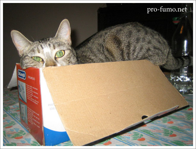 Gatto nella scatola Cat in the box